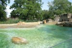 D_Berlin_Zoo_Seerobbenbecken103