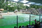 D_Berlin_Zoo_Seerobbenbecken104