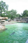 D_Berlin_Zoo_Seerobbenbecken105