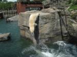 Zoo Hannover API WAVES Eisbärbecken